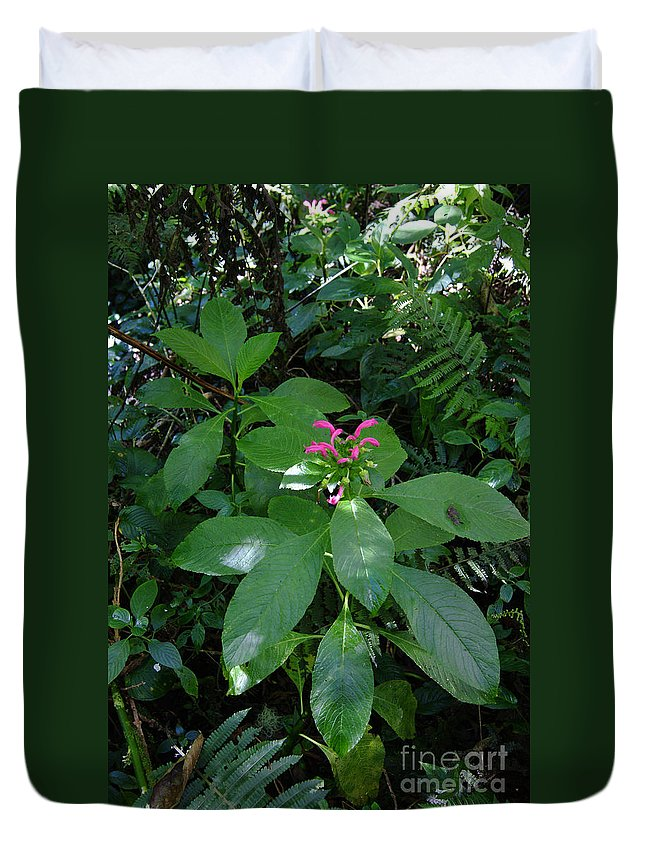 Nature Duvet Cover featuring the photograph jungle in La Amistad National Park Panama 4 by Rudi Prott