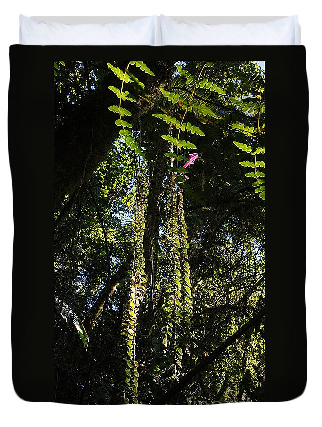 Nature Duvet Cover featuring the photograph jungle in La Amistad National Park Panama 7 by Rudi Prott