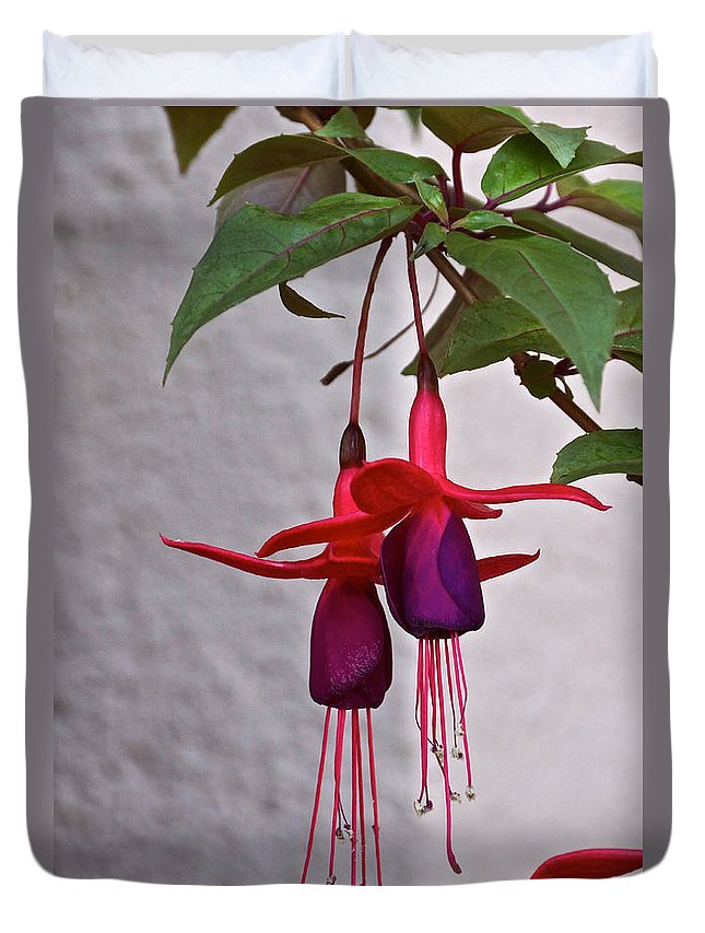 Fuchsia Duvet Cover featuring the photograph Just Hanging Out by Byron Varvarigos