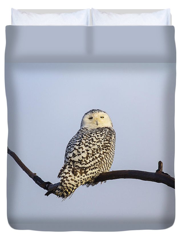 Doug Lloyd Duvet Cover featuring the photograph Just Hanging Out by Doug Lloyd
