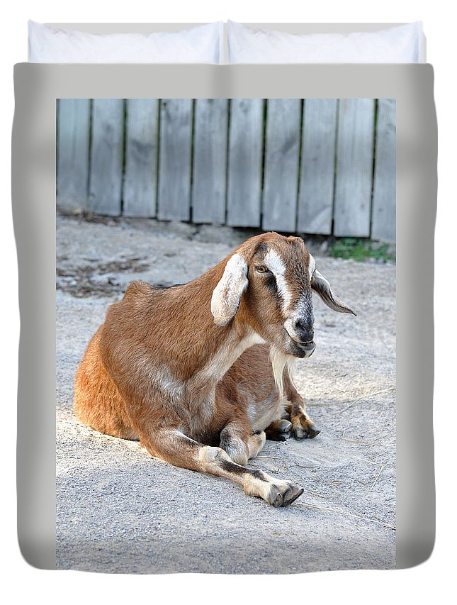 Animals Duvet Cover featuring the photograph Just Leave Me Alone by Jan Amiss Photography
