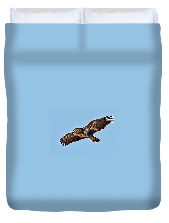 Juvenile Duvet Cover featuring the photograph Juvenile Bald Eagle In Flight Close Up by Jeff at JSJ Photography
