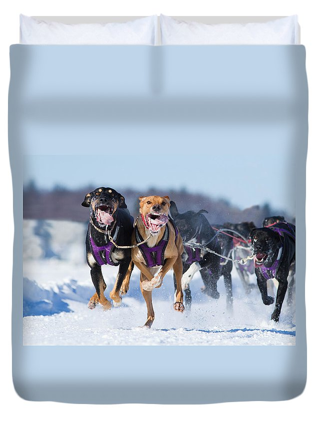 Champions Duvet Cover featuring the photograph K9 Athletes by Mircea Costina Photography