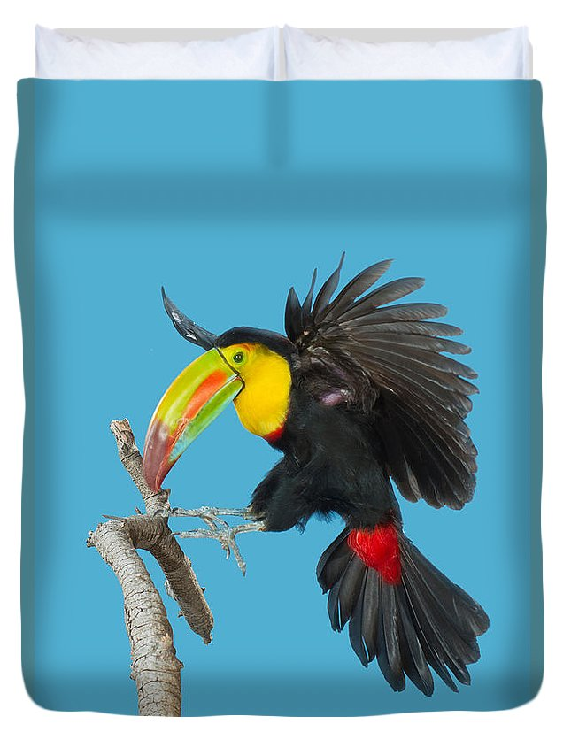 Animal Duvet Cover featuring the photograph Keel-billed Toucan About To Land by Anthony Mercieca
