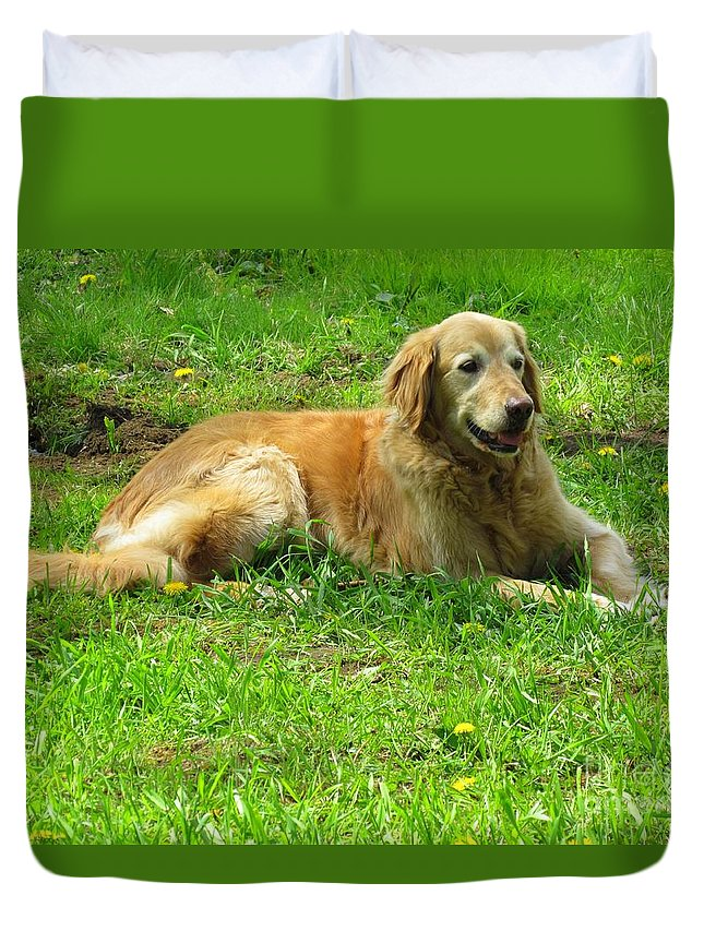 Golden Retriever Duvet Cover featuring the photograph Keeping Watch by Elizabeth Dow