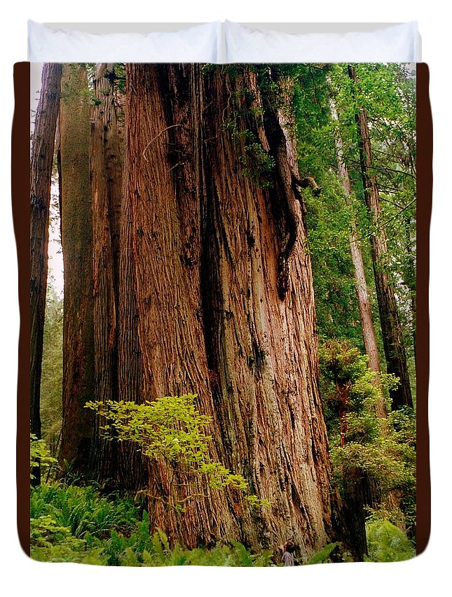 Ferns Duvet Cover featuring the photograph Kevin And The Big Tree - Redwood National Forest by Michelle Calkins