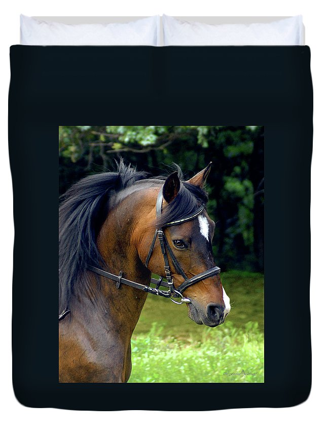 Horse Duvet Cover featuring the photograph Kind Eye Willing Heart by Jill Westbrook