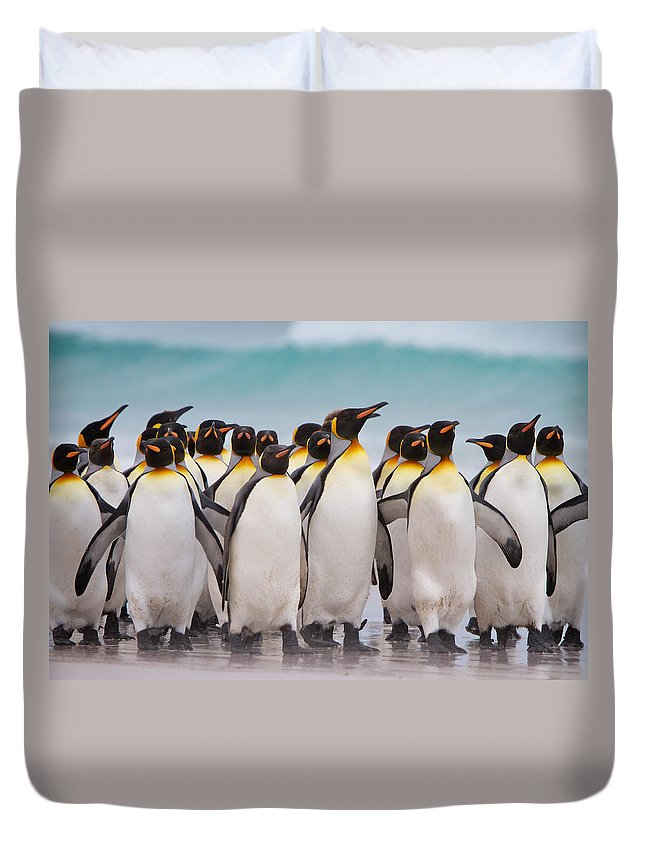 Falkland Islands Duvet Cover featuring the photograph King Penguins by David Beebe