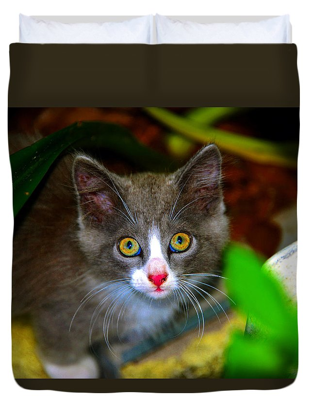 Kitten Duvet Cover featuring the photograph Kitten Work Two by David Lee Thompson