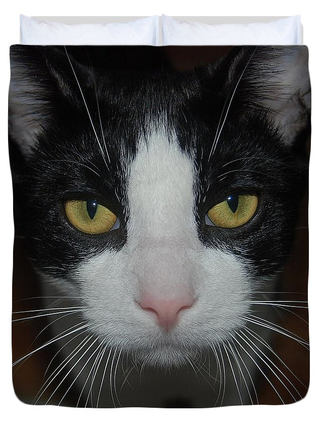 Cat Duvet Cover featuring the photograph Kitty Cat by Philip Ralley