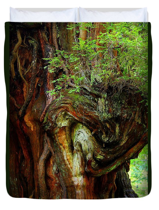 Cedar Tree Duvet Cover featuring the photograph Knot On A Giant by Jeanette C Landstrom
