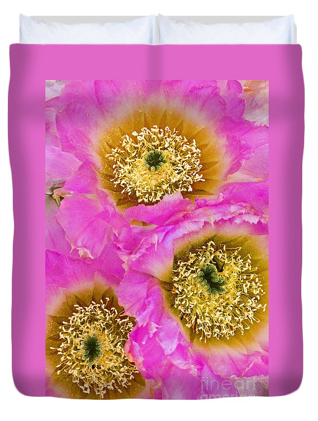 Lace Cactus Duvet Cover featuring the photograph Lace Cactus Flowers by Dave Welling