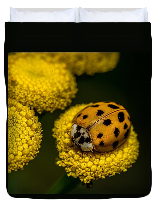 Beetle Duvet Cover featuring the photograph Lady Bug by Paul Freidlund