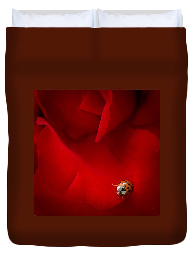 Ladybug Duvet Cover featuring the photograph Ladybird In Rose by Silken Photography