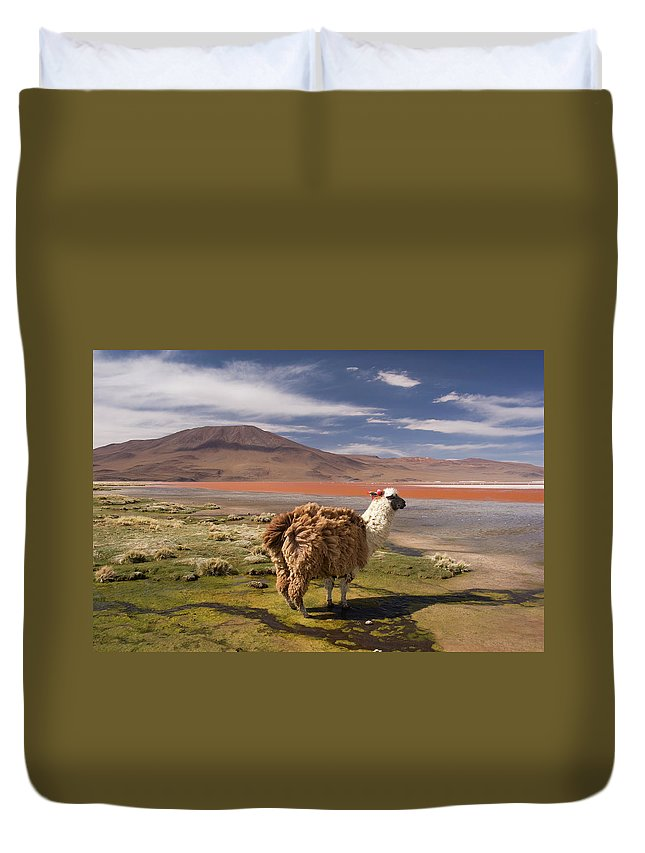 Scenics Duvet Cover featuring the photograph Laguna Colorado Lake With Llama by John Elk