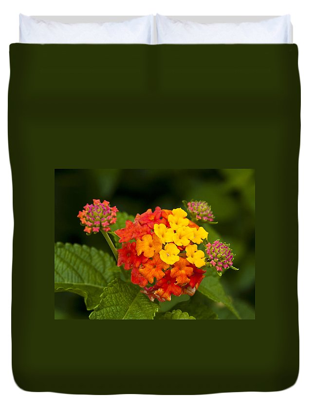 Lantana Duvet Cover featuring the photograph Lantana by Charles Hite