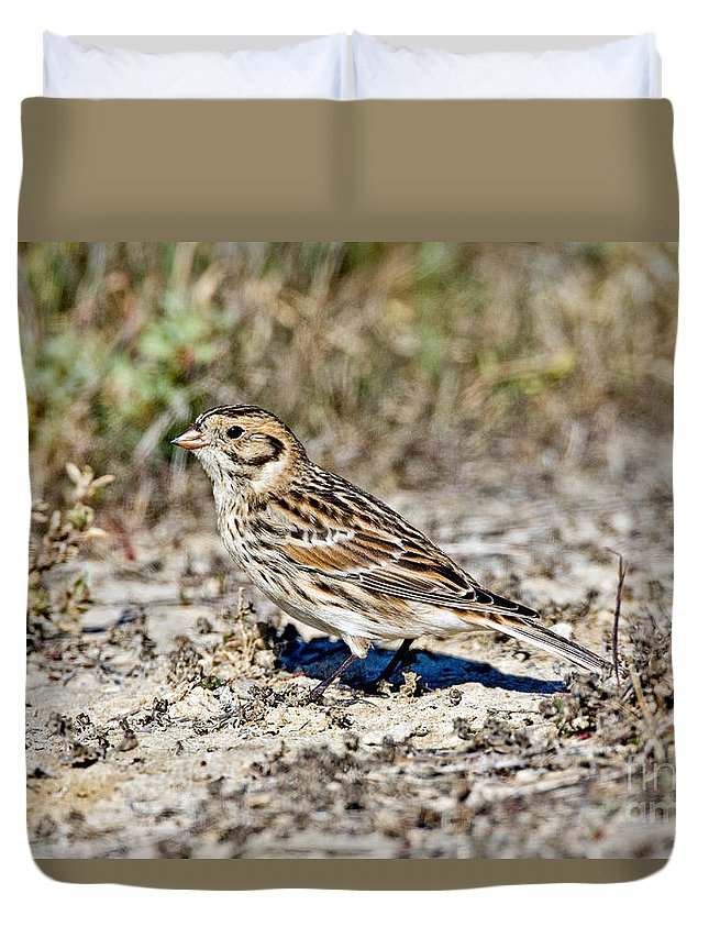Animal Duvet Cover featuring the photograph Lapland Longspur by Anthony Mercieca