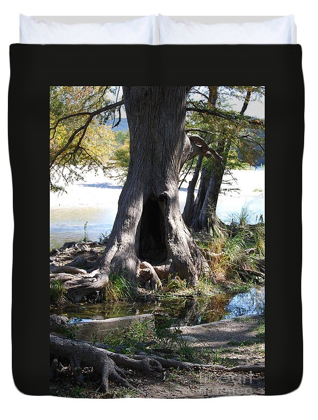 Garner State Park Duvet Cover featuring the photograph Large Tree Trunk by Ruth Housley