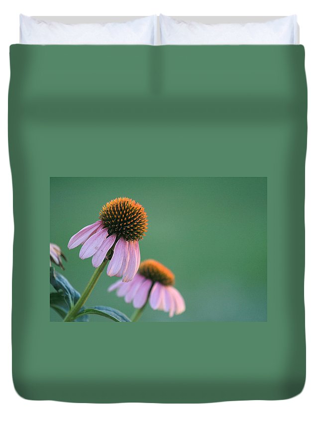 Floral Duvet Cover featuring the photograph Last Bit Of Sunlight - Cone Flower - Casper Wyoming by Diane Mintle