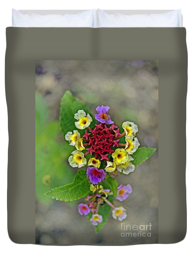 Pictures Of Flowers Duvet Cover featuring the photograph Last Blooms Number Two by Skip Willits