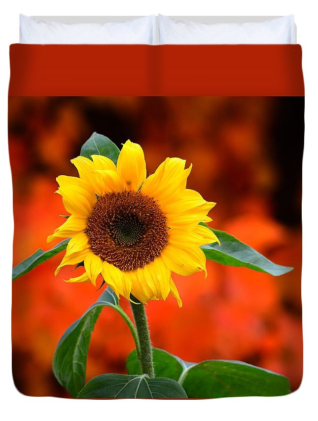Sunflower Duvet Cover featuring the photograph Last Sunflower Horizontal by Charles Owens