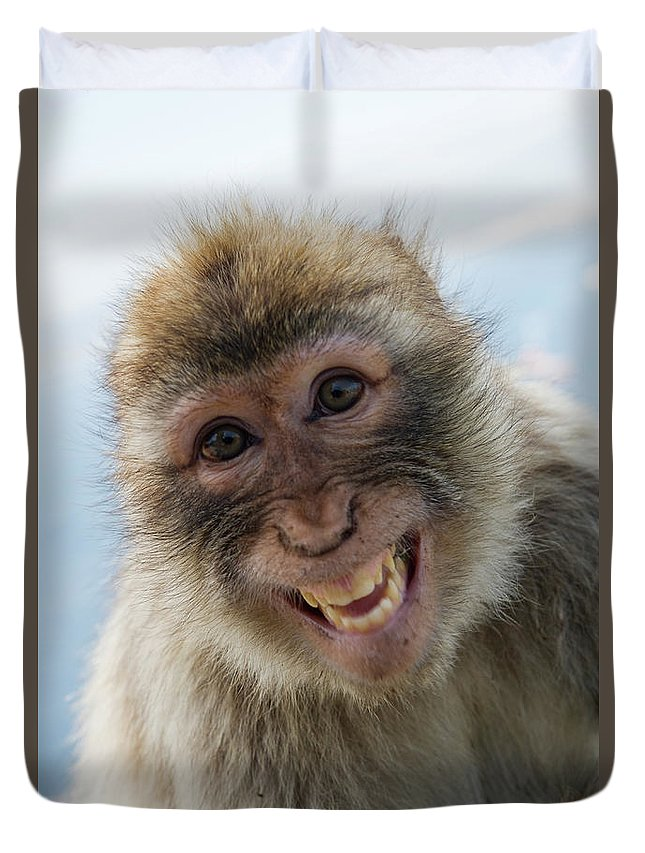 Alertness Duvet Cover featuring the photograph Laughing Gibraltar Ape Barbary Macaque by Holger Leue