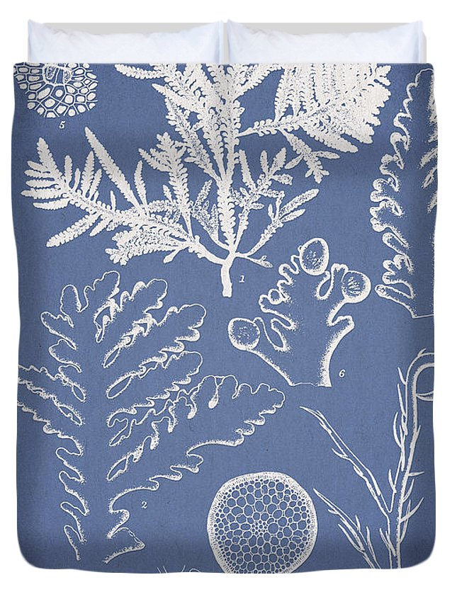 Algae Duvet Cover featuring the digital art Laurencia Concinna and Hypnea Musciformis by Aged Pixel
