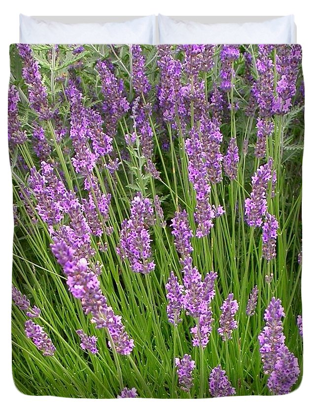 Duvet Cover featuring the photograph Lavendar by Cynthia Wallentine