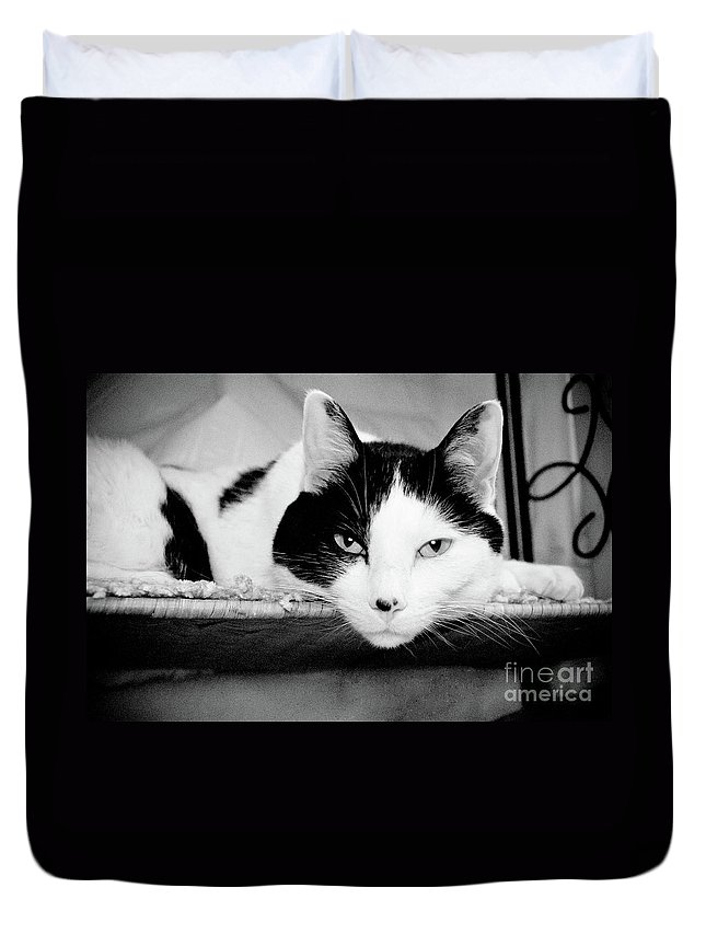 Andee Design Cat Duvet Cover featuring the photograph Le Cat by Andee Design