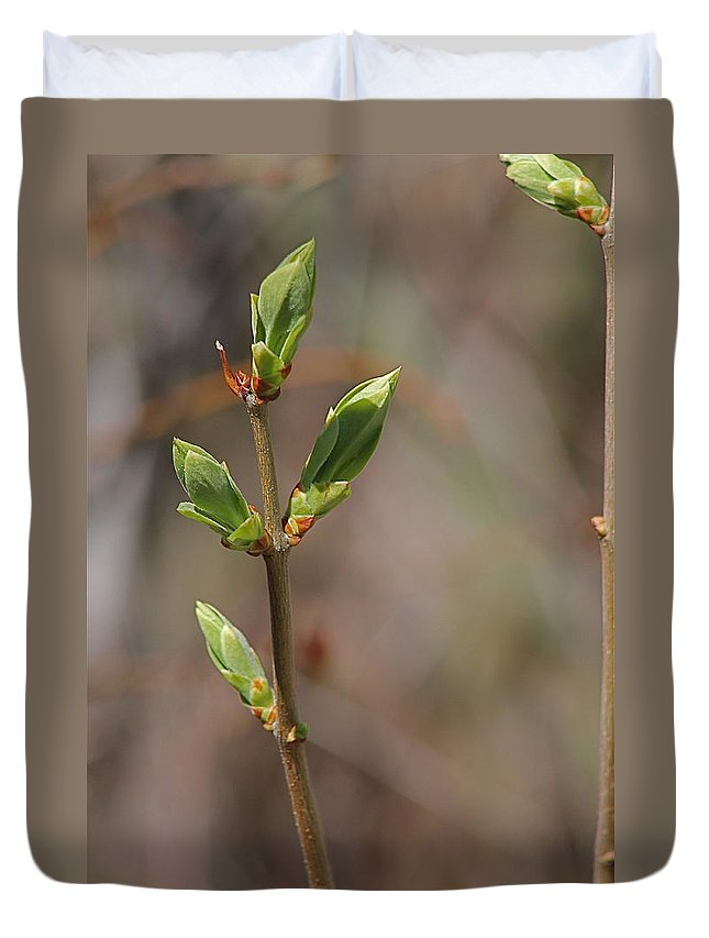 Bushes Duvet Cover featuring the photograph Leafing Out by Wayne Williams