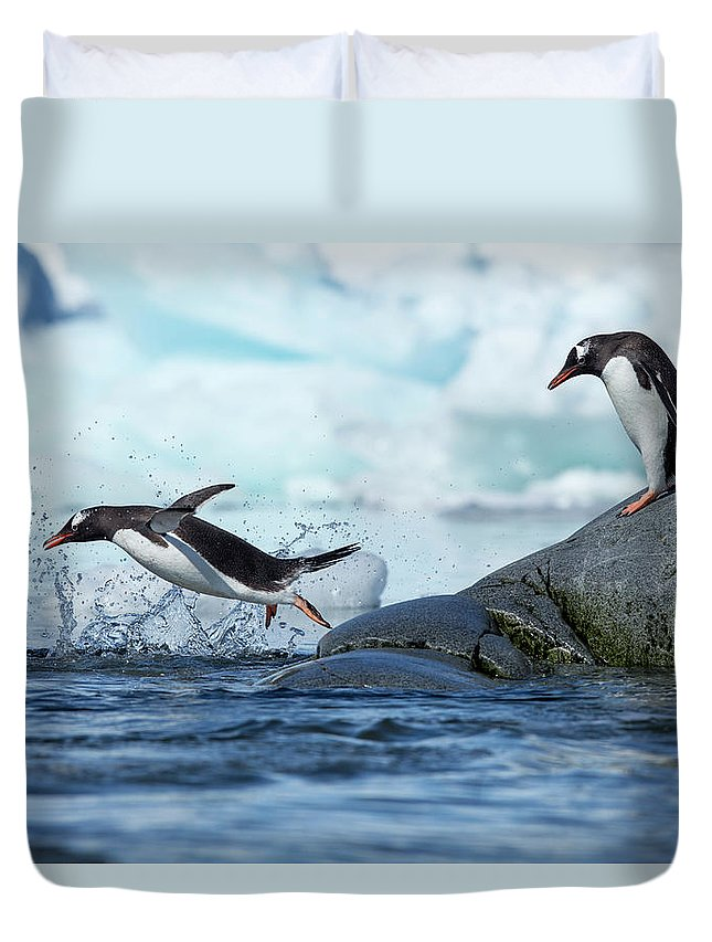 Water's Edge Duvet Cover featuring the photograph Leaping Gentoo Penguins, Antarctica by Paul Souders