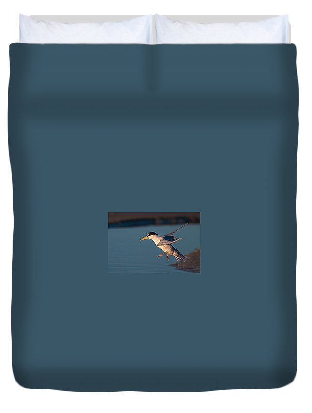 Least Duvet Cover featuring the photograph Least Tern In Flight by Photos By Cassandra