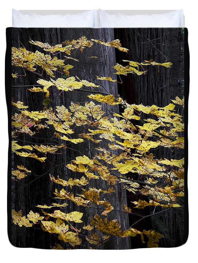 Leaf Duvet Cover featuring the photograph Leaves And Trees by Robert Woodward