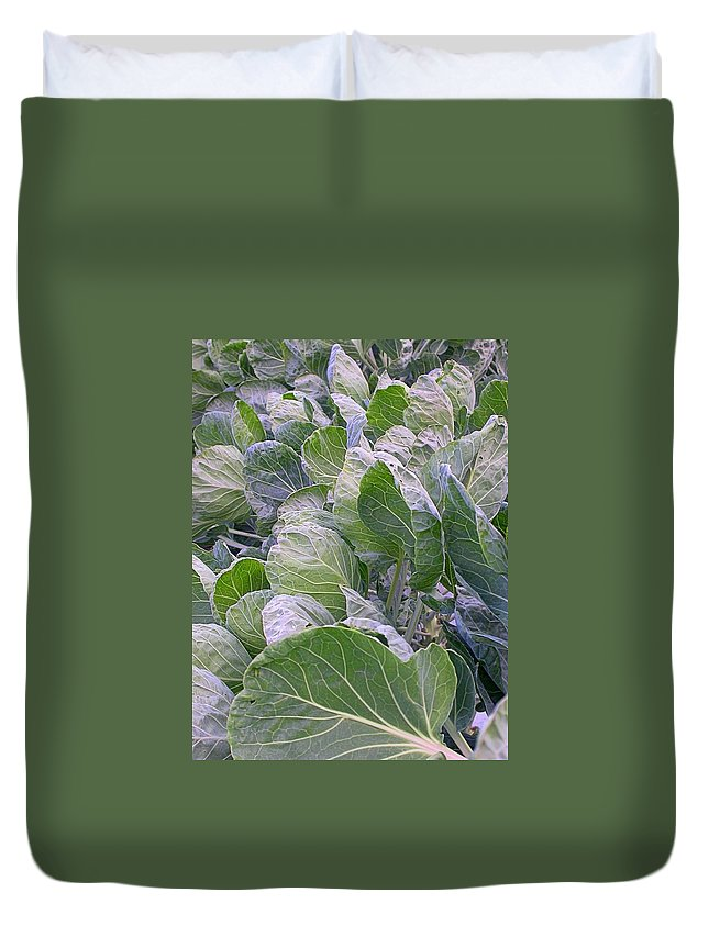 Cabbage Leaves Duvet Cover featuring the photograph Leaves Of Green by Cynthia Wallentine