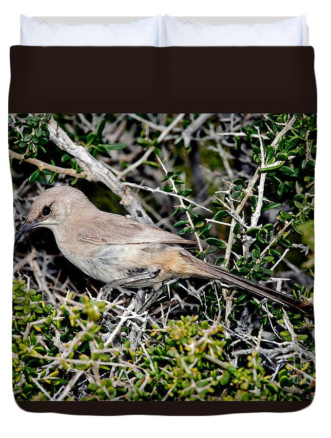 Animal Duvet Cover featuring the photograph Lecontes Thrasher In Bush by Anthony Mercieca