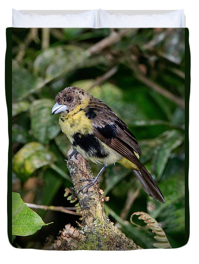 Lemon-rumped Tanager Duvet Cover featuring the photograph Lemon-rumped Tanager Molting by Anthony Mercieca