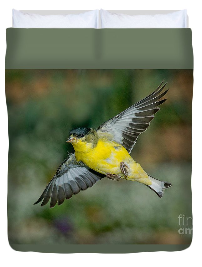 Lesser Goldfinch Duvet Cover featuring the photograph Lesser Goldfinch Male-flying by Anthony Mercieca
