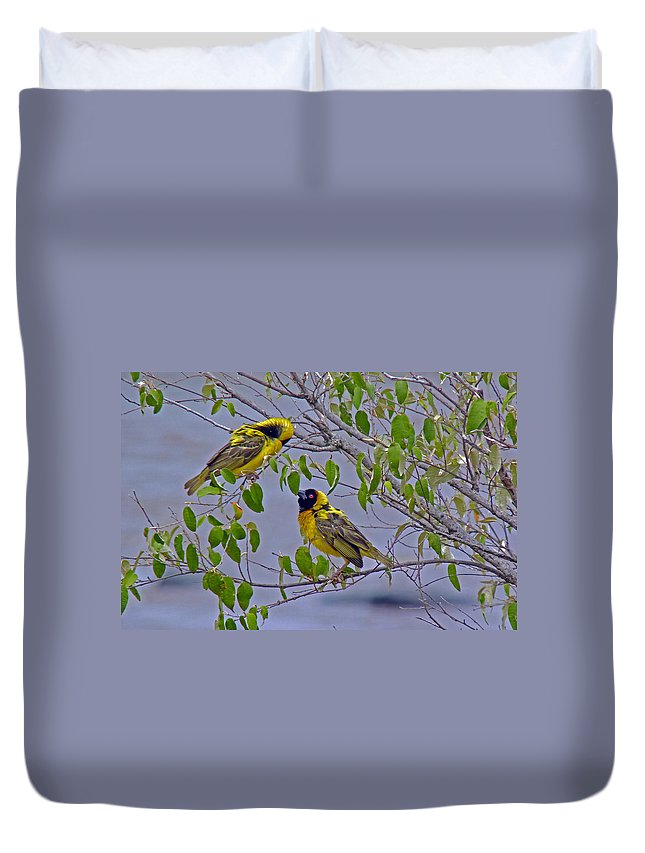 Lesser Masked Weaver Duvet Cover featuring the photograph Lesser Masked Weaver by Tony Murtagh