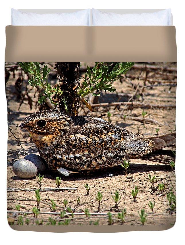 Fauna Duvet Cover featuring the photograph Lesser Nighthawk Chordeiles Acutipennis by Anthony Mercieca