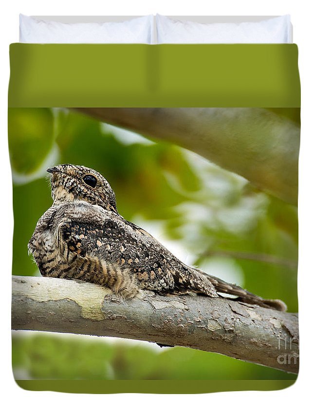 Animal Duvet Cover featuring the photograph Lesser Nighthawk On Branch by Anthony Mercieca