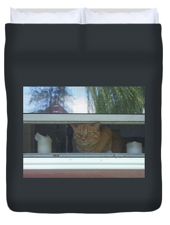 Cat Duvet Cover featuring the photograph Let Me Out Cat Picture by Diane Palmer