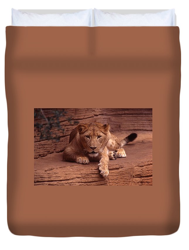 Lion Duvet Cover featuring the photograph Let's Do Lunch by Skip Willits