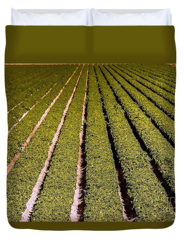 Yuma Duvet Cover featuring the photograph Lettuce Farming by Robert Bales