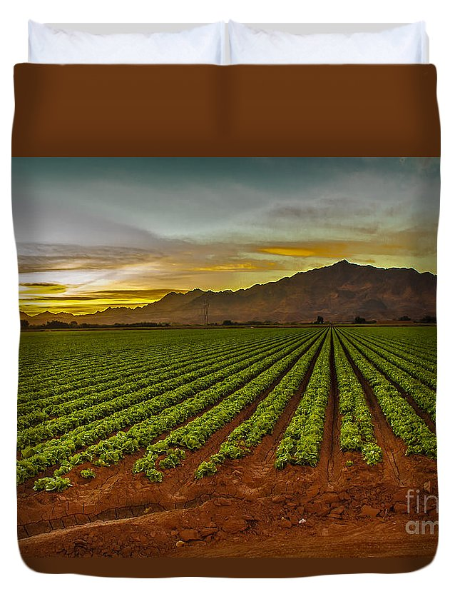 Winter Lettuce Duvet Cover featuring the photograph Lettuce Sunrise by Robert Bales