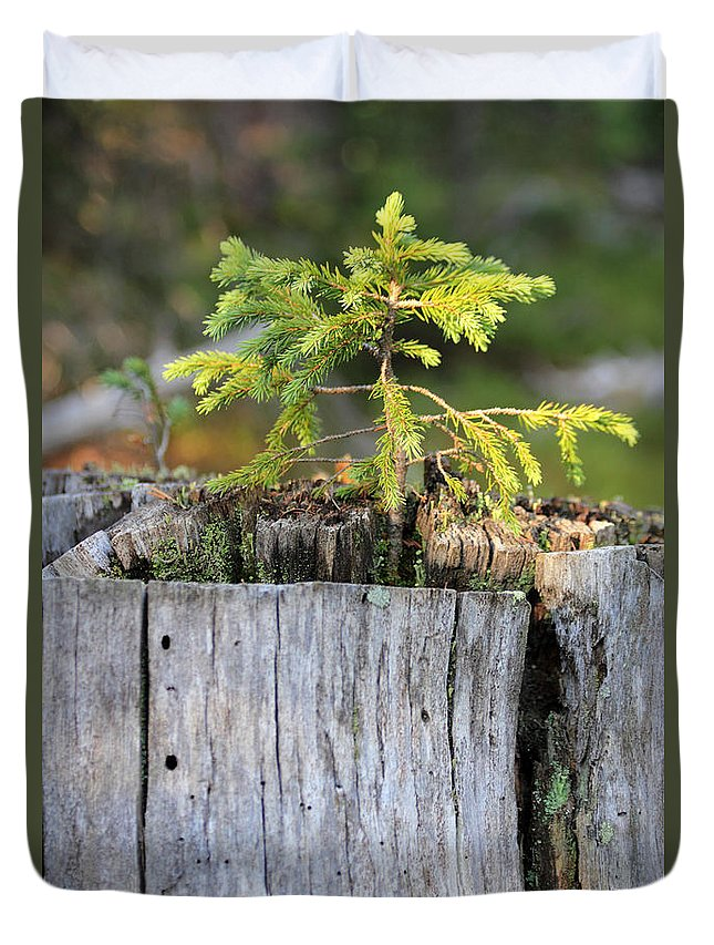 Pine Tree Duvet Cover featuring the photograph Life After Death by Shane Bechler