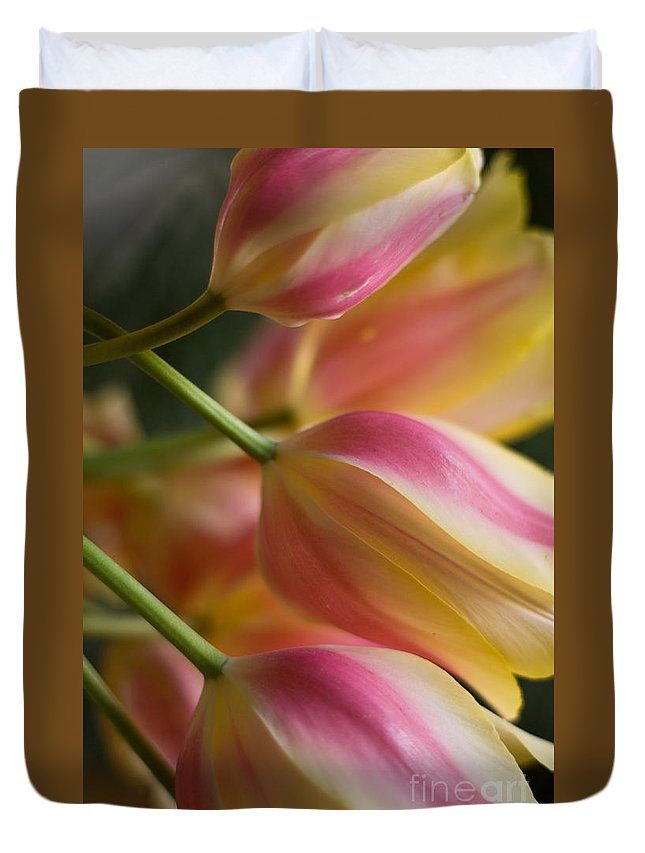 Tulip Duvet Cover featuring the photograph Light Of Spring by Mike Reid