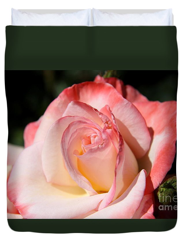 Shrub Rose Duvet Cover featuring the photograph Like Sugar And Spice by Christiane Schulze Art And Photography