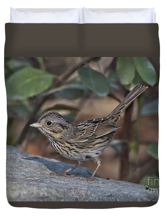 Lincoln's Sparrow Duvet Cover featuring the photograph Lincolns Sparrow by Anthony Mercieca