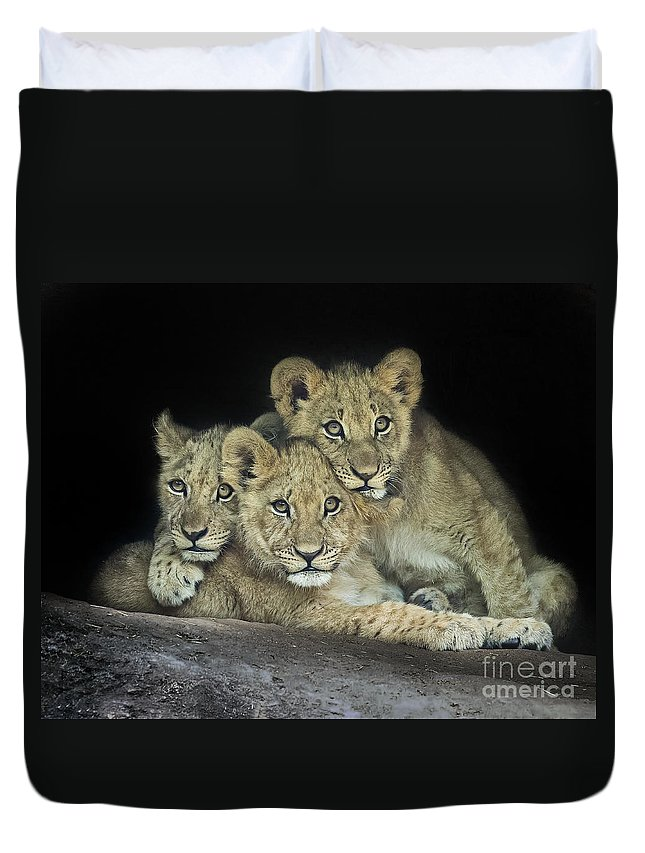 Cute Duvet Cover featuring the photograph Three Lion Cubs by Linda D Lester