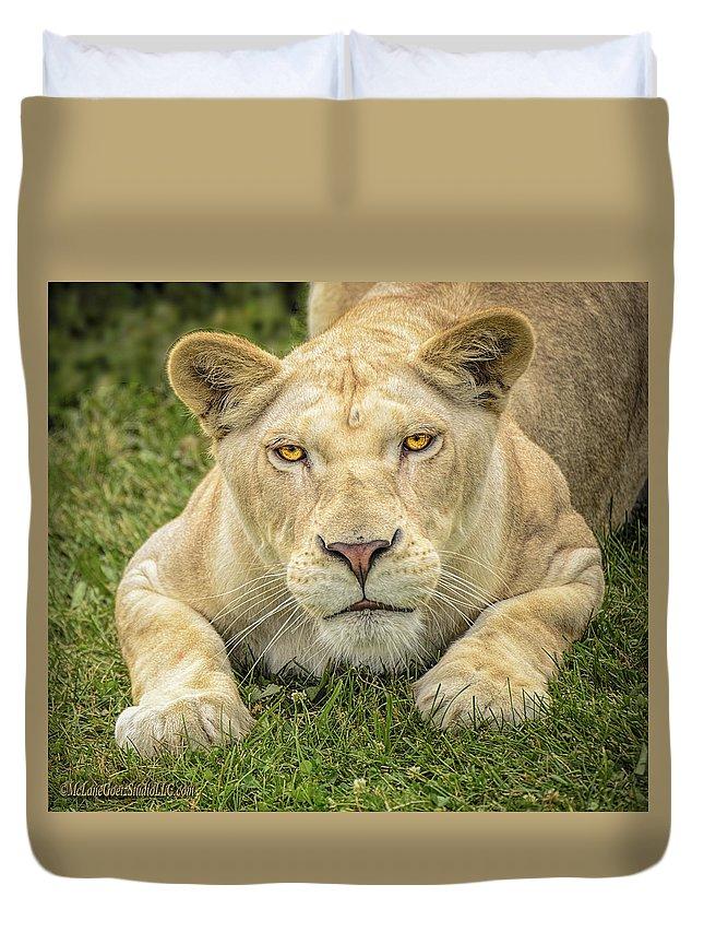 Lion Duvet Cover featuring the photograph Lion In The Grass by LeeAnn McLaneGoetz McLaneGoetzStudioLLCcom